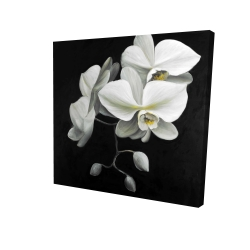 Canvas 24 x 24 - 3D - White orchids