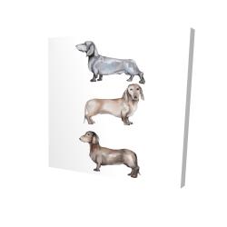 Canvas 24 x 24 - 3D - Small dachshund dog