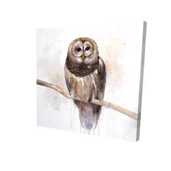 Canvas 24 x 24 - 3D - Barred owl