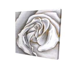 Canvas 24 x 24 - 3D - White rose delicate