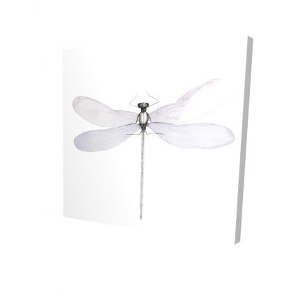 Delicate dragonfly