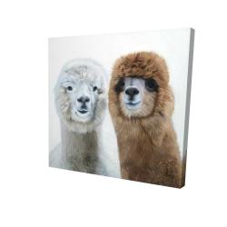 Two lamas