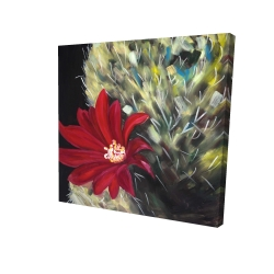 Canvas 24 x 24 - 3D - Echinopsis red cactus flower