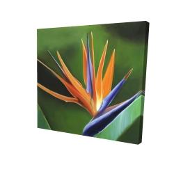 Canvas 24 x 24 - 3D - Bird of paradise flower