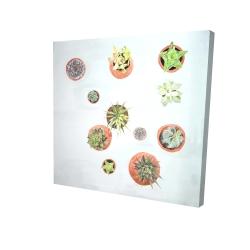 Canvas 24 x 24 - 3D - Cactus plants