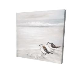 Canvas 24 x 24 - 3D - Two sandpipiers birds