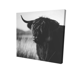 Canvas 24 x 24 - 3D - Beautiful monochrome highland cow