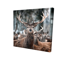 Canvas 24 x 24 - 3D - Stags