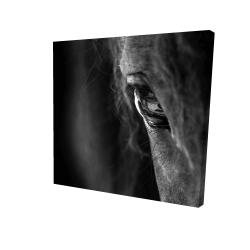 Canvas 24 x 24 - 3D - Black horse