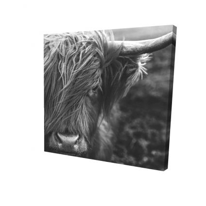 Monochrome portrait highland cow