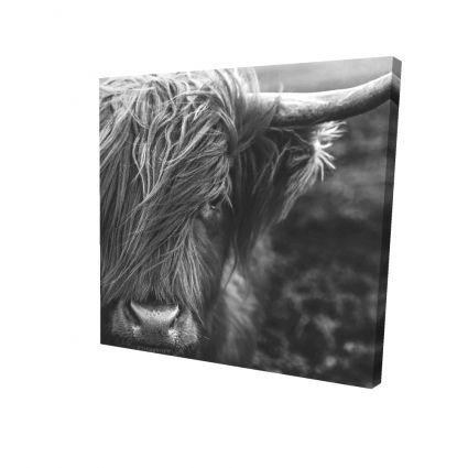 Monochrome portrait highland cow