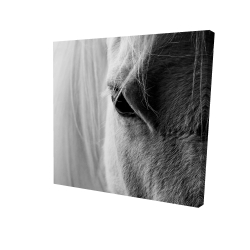 Canvas 24 x 24 - 3D - The white horse eye