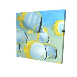 Canvas 24 x 24 - 3D - Butterfly fishes