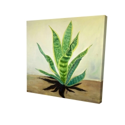 Canvas 48 x 48 - 3D - Succulent plant mother-in-law's tongue