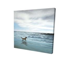 Canvas 24 x 24 - 3D - Dog on the beach