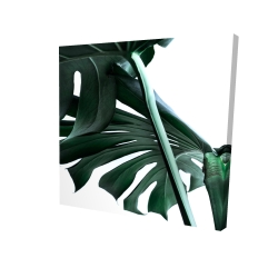 Canvas 24 x 24 - 3D - Monstera deliciosa