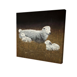 Canvas 36 x 36 - 3D - Sheep and lambs