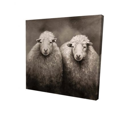 Sheep sepia