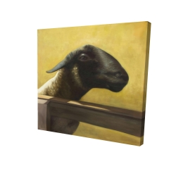Canvas 24 x 24 - 3D - Young ram