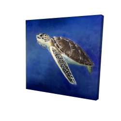 Canvas 24 x 24 - 3D - Beautiful sea turtle