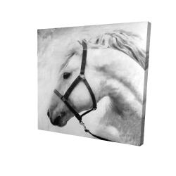 Canvas 24 x 24 - 3D - Darius the horse