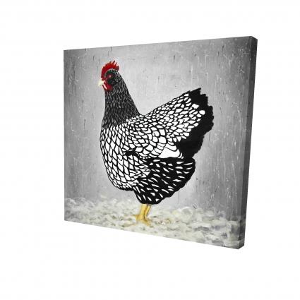 Black and white wyandotte hen