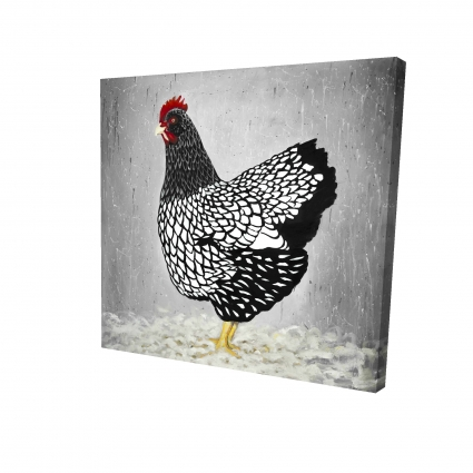 Black and white wyandotte hen