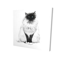 Canvas 24 x 24 - 3D - Blue eyes fluffy siamese cat