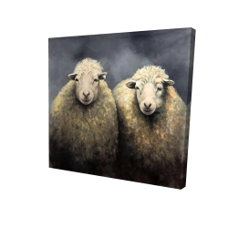 Canvas 24 x 24 - 3D - Wool sheeps