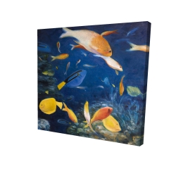 Canvas 24 x 24 - 3D - Colorful fish under the sea