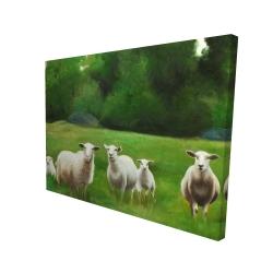 Canvas 36 x 48 - 3D - Fields of sheep