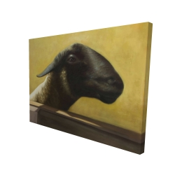 Canvas 36 x 48 - 3D - Young ram