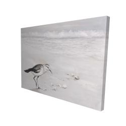 Canvas 36 x 48 - 3D - Semipalmated sandpiper