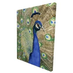 Canvas 36 x 48 - 3D - Peacock