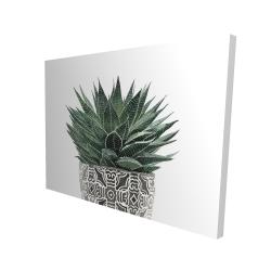 Canvas 36 x 48 - 3D - Zebra plant succulent