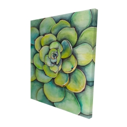 Canvas 48 x 60 - 3D - Watercolor succulent plant