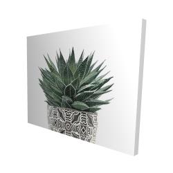 Canvas 48 x 60 - 3D - Zebra plant succulent