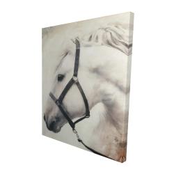 Canvas 48 x 60 - 3D - Darius the white horse