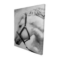 Canvas 48 x 60 - 3D - Darius the horse