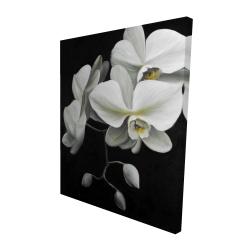 Canvas 48 x 60 - 3D - White orchids