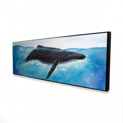 Framed 16 x 48 - 3D - Blue whale
