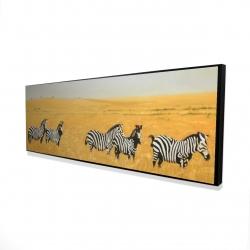 Framed 16 x 48 - 3D - Herd of zebra