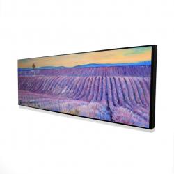 Framed 16 x 48 - 3D - Landscape of a field of lavender