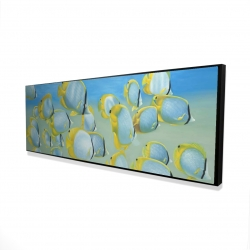 Framed 16 x 48 - 3D - Butterfly fishes