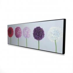 Framed 16 x 48 - 3D - Dahlia pomponowa