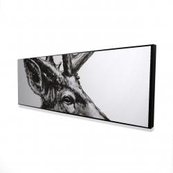 Framed 16 x 48 - 3D - Roe deer plume