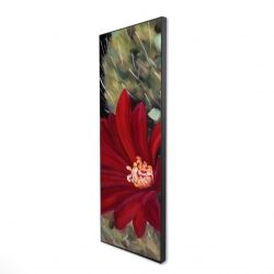 Framed 16 x 48 - 3D - Echinopsis red cactus flower