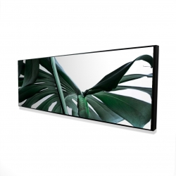 Framed 16 x 48 - 3D - Monstera deliciosa