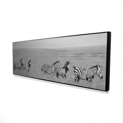 Framed 16 x 48 - 3D - Zebras in the savannah