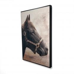 Encadré 24 x 36 - 3D - Gallopin le cheval brun